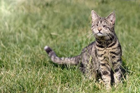 Blind stray cat sitting on a meadow.