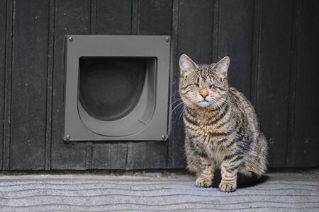 Blind domestic cat sitting in the front of a cat flip.