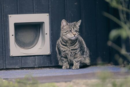 Blind tabby cat sitting in front of a doggy door and looking away.