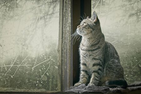 Cute tabby cat sitting on the windowsill and looking away.