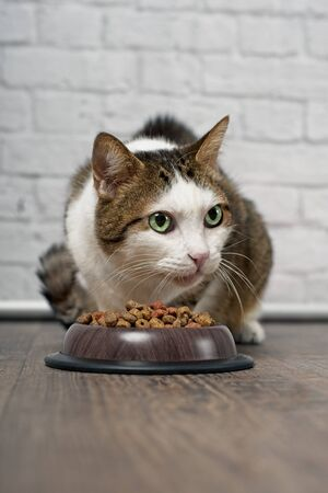 Tabby cat sitting next to a food bowl filled with dried food and looking sideways.