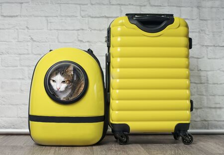 Cute tabby cat wearing a suitcase next to yellow suitcase is ready to travel.