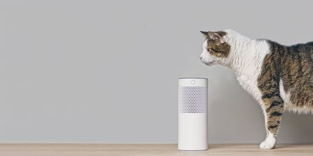 Cute tabby cat looking at a smart controlled smart speaker. Panoramic image with copy space. Standard-Bild - 131901256