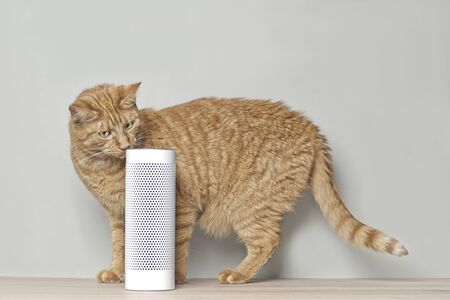 Cute ginger cat looking curious to a voice controlled smart speaker. 版權商用圖片