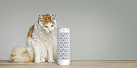 Cute tabby cat listening to a voice controlled smart speaker. Panoramic image with copy space. 版權商用圖片