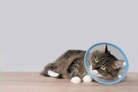 Tabby cat with a pet cone looking anxiously sideways. Horizontal image with copy space.