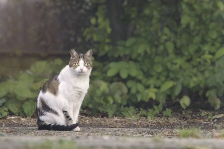 Cute tabby cat sitting outdoors and looking at camera. Stok Fotoğraf