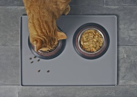 Cat eating dry food next to a food bowl, taken directly from above. 版權商用圖片