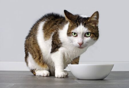 Tabby cat in front of a food bowl.
