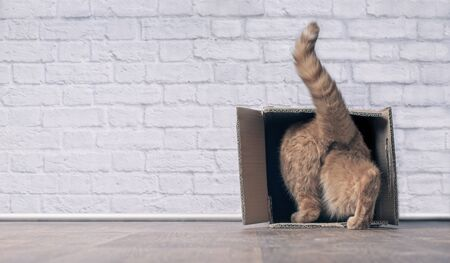 Funny ginger cat step inside a cardboard box, banner size with copyspace.