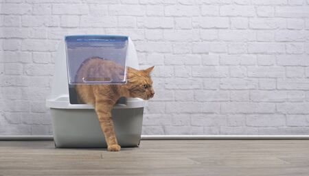 Niedliche Ingwerkatze, die aus einer geschlossenen Katzentoilette geht. Panramisches Bild mit Kopienraum.