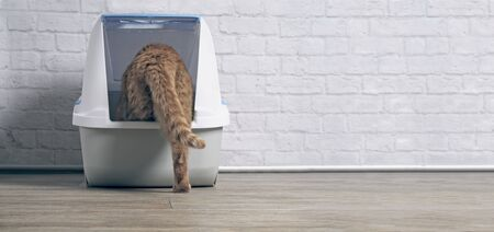 Orange tabby cat step inside a litter box. panoramic image with copy space.