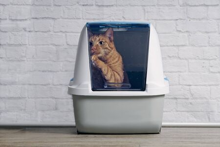Cute ginger cat step outside a closed litter box. Horizontal image with copy space.