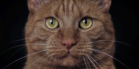 Extreme close-up of a ginger cat looking to the camera. Isolated on black background. Standard-Bild - 139570090