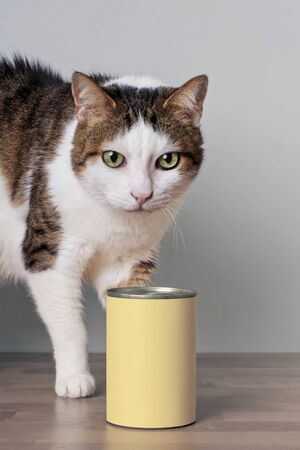 Tabby cat behind cat food in an aluminum can with copy space for your own design. 版權商用圖片