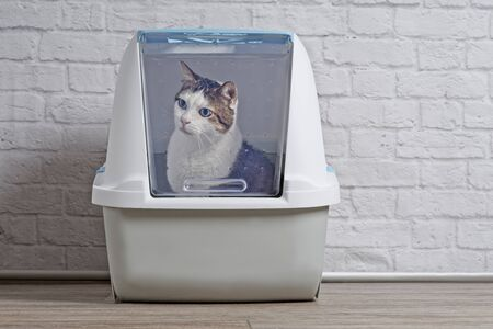 Cute tabby cat sitting in a closed litter box and looking curious sideways.
