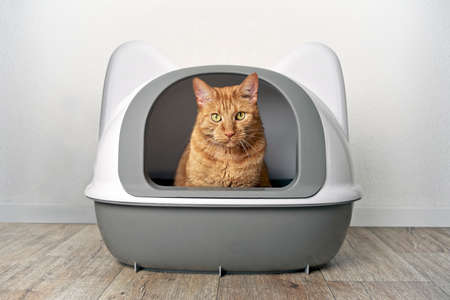 Ginger cat sitting in a litter box and look funny to the camera.