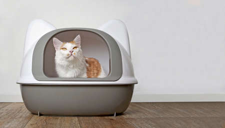 Tabby cat looking funny out of a litter box. Panoramic image with copyspace for your individual text.