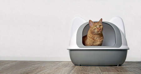 Cute ginger cat looking out of a closed Litter box. Panramic image with copy space. Standard-Bild