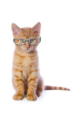 Funny red kitten in nerd glasses looking at camera. Isolated on white background. Standard-Bild