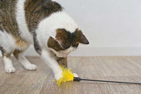 Child aged cat playing with a feather cat toy. Standard-Bild