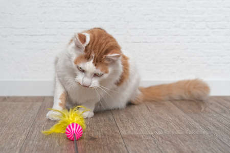 Cute tabby cat playing with a feather cat toy.