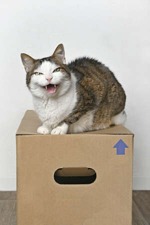 Angry tabby cat sitting on a cardboard box and looking to the camera. Standard-Bild