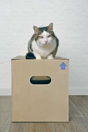 Moving with pets - Tabby cat sitting on a cardboard box. Standard-Bild