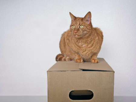 Moving with pets - Ginger cat sitting on a cardboard box and looking away. Standard-Bild