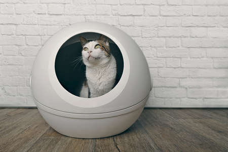 Cute tabby cat sitting in a self-cleaning litter box and looking away.