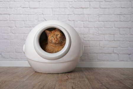 Cute ginger cat sitting in a self-cleaning litter box and looking at camera.