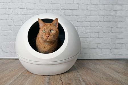 Cute red cat sitting in a self-cleaning litter box and looking away.