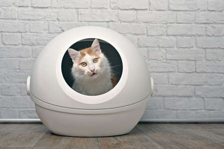 Cute tabby cat sitting in a self-cleaning litter box and looking funny at camera. Standard-Bild