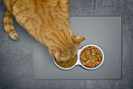 Ginger Cat eating dry food beside a food bowl with wet food, seen directly from above.