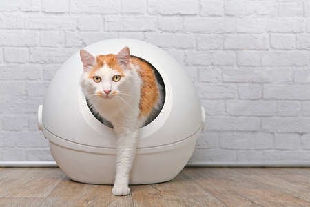 Cute tabby cat going out of a self-cleaning Litter box. Horizontal image with copy space.
