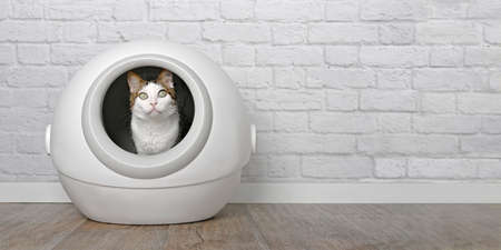 Tabby cat sitting in a self-cleaning litter box and looking curious at camera. Panoramic image with copy space. Standard-Bild