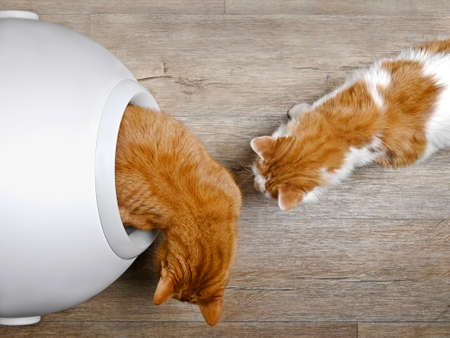 Two cats using a closed litter box, seen directly from above.