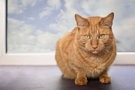 Cute ginger cat sitting on a window sill and looking at camera.