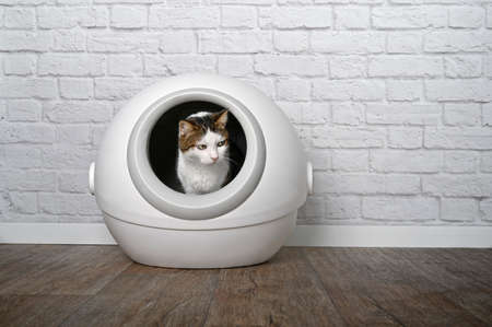 Cute tabby cat sitting in a automatic cat litter box and looking funny sideways.
