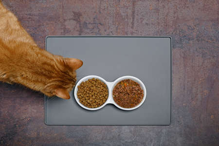 Overhead view of a red cat sniffs at wet and dry pet food from the ceramic food bowl.
