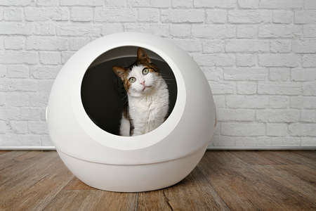 Cute tabby cat sitting in a self cleaning litter box and looking curious to the camera.