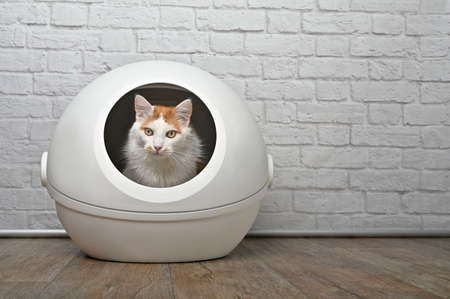 Cute longhair cat sitting in a self-cleaning litter box and looking away. Standard-Bild