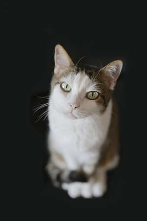Cute tabby cat looking curious up to the camera. Isolated on black background. Standard-Bild