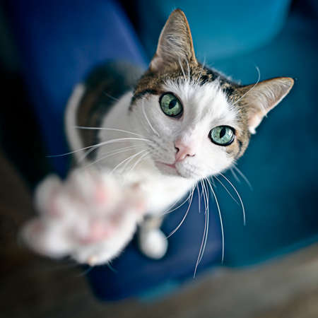 Cute tabby cat looking curious up to the camera. High angle view with selective focus. Standard-Bild