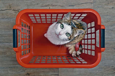 Cute tabby cat sitting in a red laundry basket and looking curious to the camera, seen directly from above. Standard-Bild