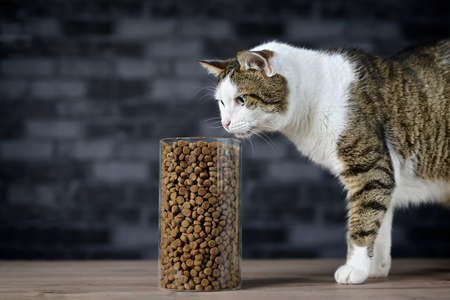 Tabby cat looking curious to dry cat food in instorage jar. Side view with copy space. Standard-Bild