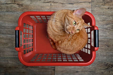 Cute ginger cat sitting in a red laundry basket and looking funny away, seen directly from above. Standard-Bild