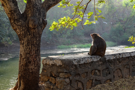 a monkey sitting on a small wall besides a tree