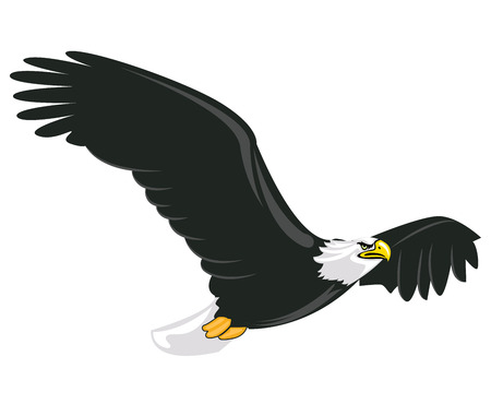 Illustration of majestic adult bald eagle flying with white background