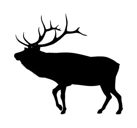 antlers: Elk